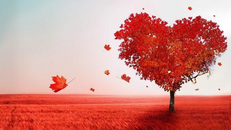 Rot gefärbter Baum mit Krone in Herzform auf roter Wiese, Baum der Liebe