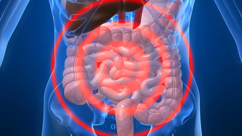 Anatomie - Grafik des menschlichen Darms mit rotem Fadenkreuz