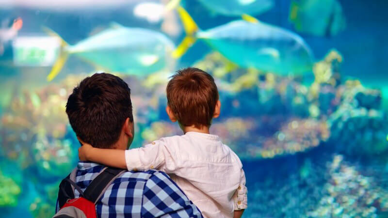 Vater und Sohn betrachten Fische in einem großen Aquarium