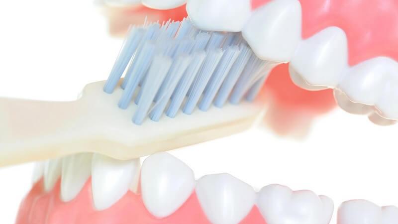 Gebiss-Modell mit Zahnbürste, weißer Hintergrund