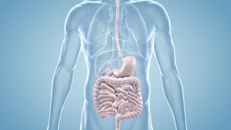 Blaugraue 3-D-Grafik des Verdauungstrakts im menschlichen Körper