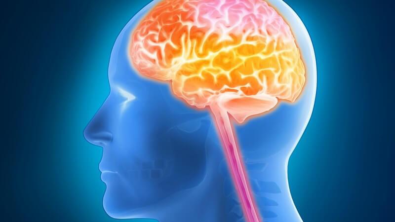 3-D-Grafik eines menschlichen Kopfes mit gelb-rot leuchtend hervorgehobenem Gehirn/Gehirnaktivität
