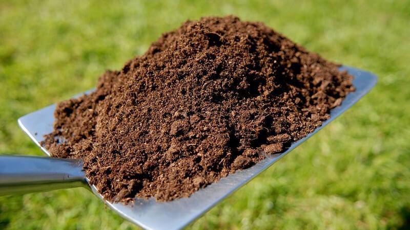 Gartenschaufel mit Erde darauf wird über Rasen gehalten