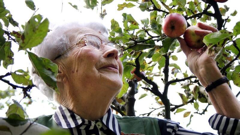 Ältere Frau pflückt Apfel vom Baum