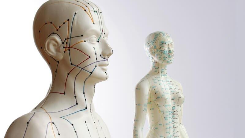 Modell eines menschlichen Körpers mit angezeichneten, farbigen Akupunktur Punkten und Strichen
