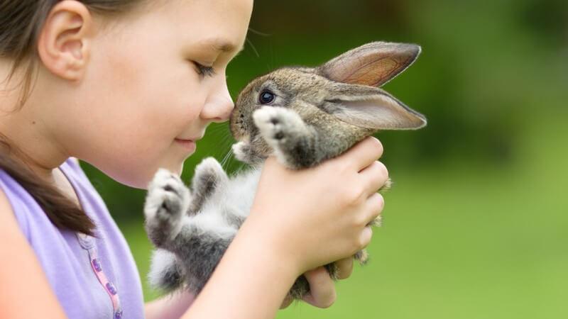 Mädchen in lila Kleidung kuschelt mit einem kleinen Kaninchen