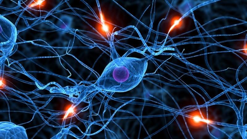 Grafik 3D Nervenzellen