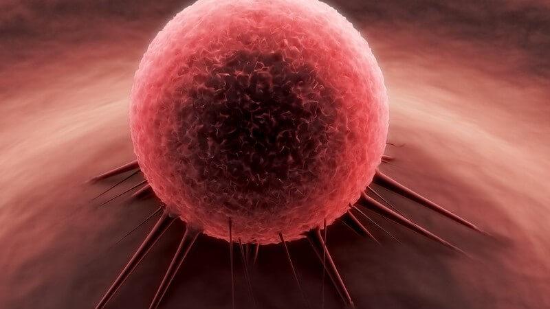 3D Grafik rote Krebszelle