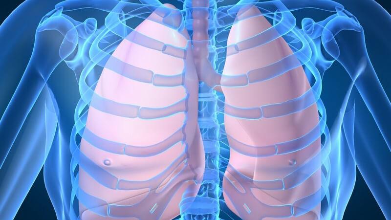 Anatomie - Grafik der menschlichen Lunge