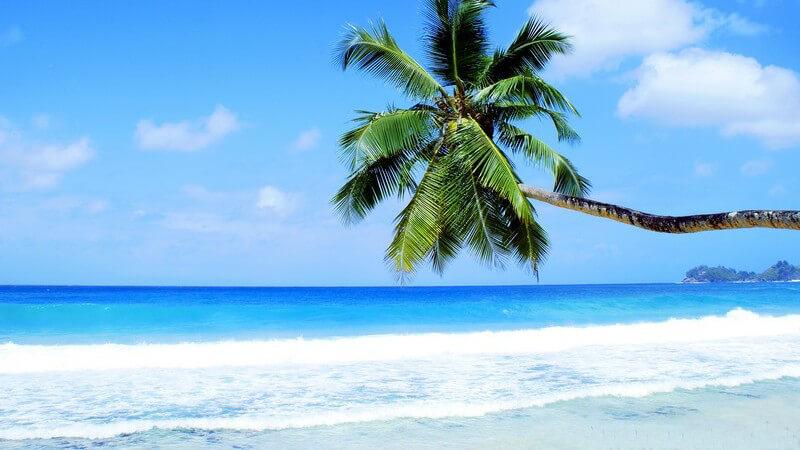 Grüne Palme ragt von rechts vor den strahlend blauen Himmel und das azurblaue Meer der Seychellen