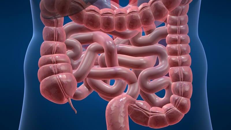 Anatomie - Grafik des menschlichen Darms