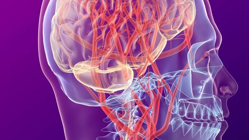 Grafische Darstellung Blutkreislauf im Gehirn