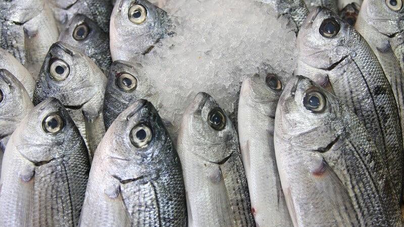 Frische Fische auf Eis