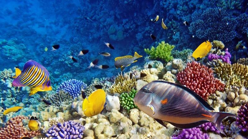 Korallen und Fische im Aquarium oder Meer