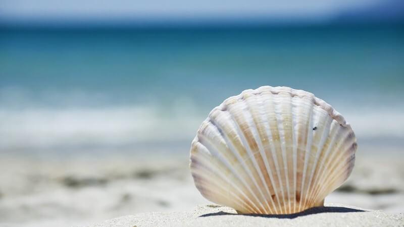 Muschel im Sandstrand, im Hintergrund das Meer