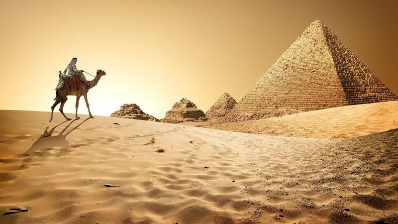 Kamel reitet im Wüstensand auf Pyramiden zu