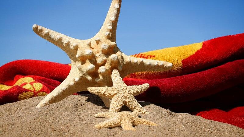 Dekoseesterne neben Strandtuch auf Sand unter blauem Himmel