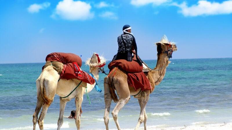 Mann reitet auf Kamel, hat weiteres Kamel an Leine an Strand mit Meer