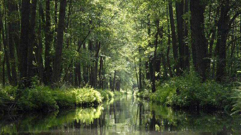 Landschaftsbild Spreewald mit dem Fluss