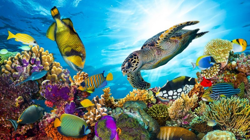 Bunte Fische und eine Schildkröte an einem Korallenriff