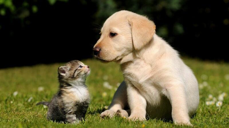 Ein Hundewelpen und Katzenjunges sitzen auf einer Wiese und gucken sich an