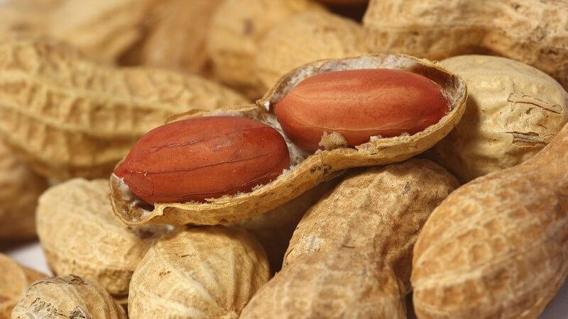 Zwei ganze Erdnüsse in Schale auf mehreren ganzen Erdnüssen