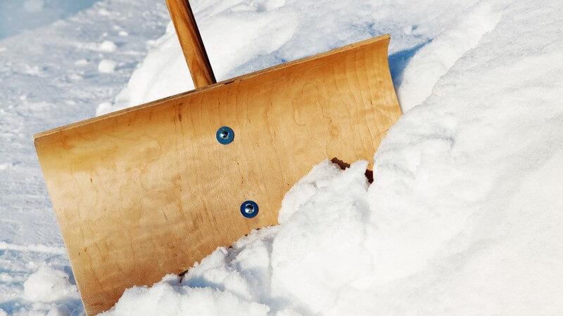 Große Schneeschaufel steckt im Schnee, Schneeschieber