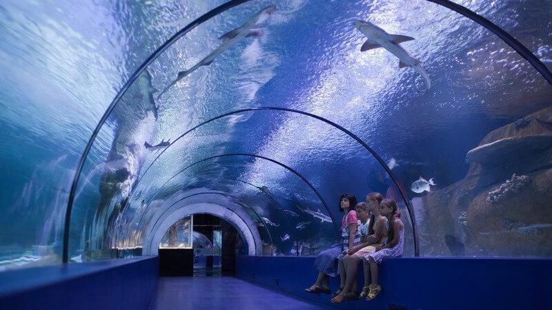 Besucher sitzen in einem großen Tunnel in einem Aquarium mit Haien