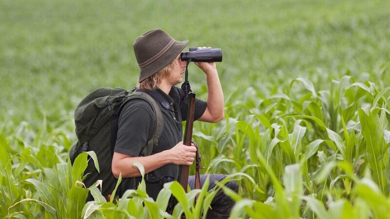 Jäger mit Fernglas im Maisfeld