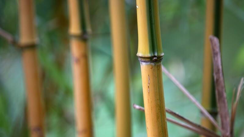 Ausschnitt Bambusstöcke