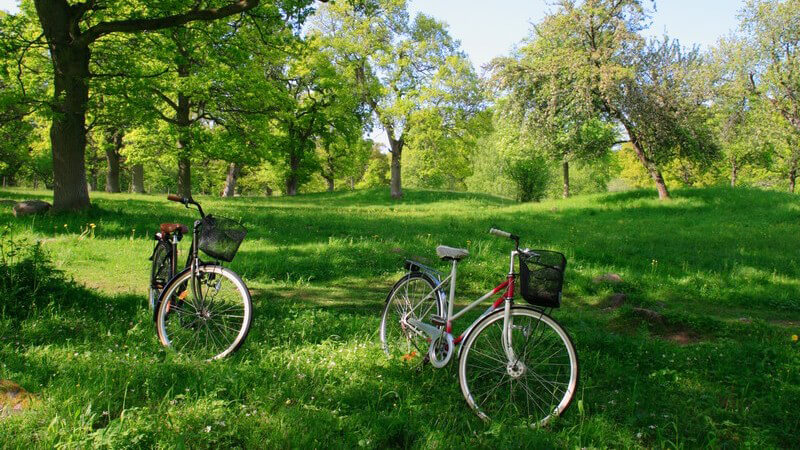 Zwei Fahrräder auf grüner Wiese umgeben von vielen Bäumen