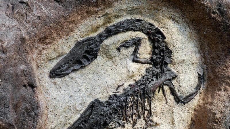 Fossil auf Stein, Archäologie