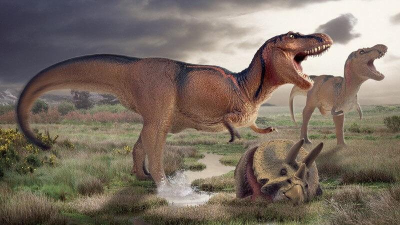 Grafik Dinosaurier, Tyrannosaurus
