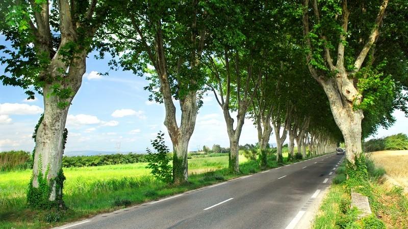 Alleestraße zwischen Feldern