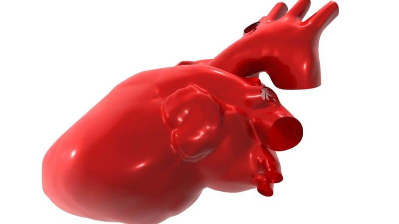 Rotes Modell menschliches Herz auf weißem Hintergrund