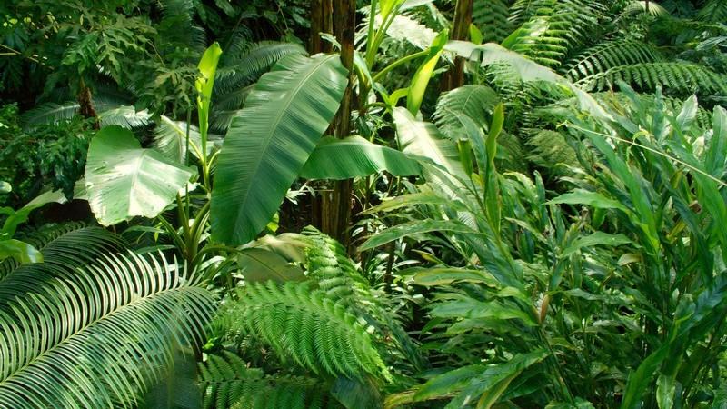 Jungelpflanzen