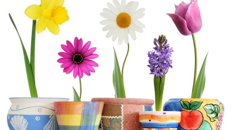 Bunte Frühlingsblumen in bunten Blumentöpfen