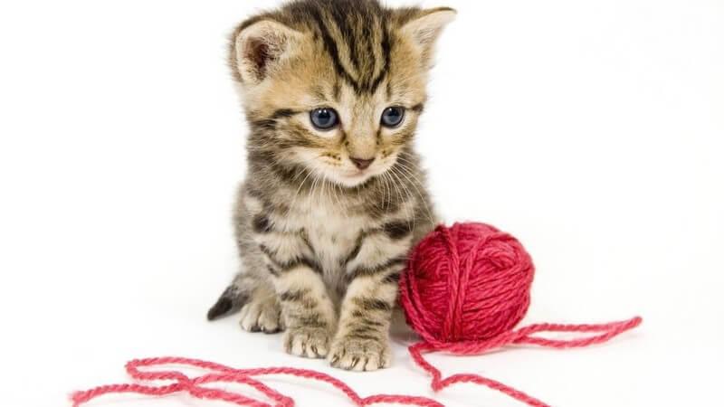 Katzenbaby sitzt vor roten Ball aus Wolle
