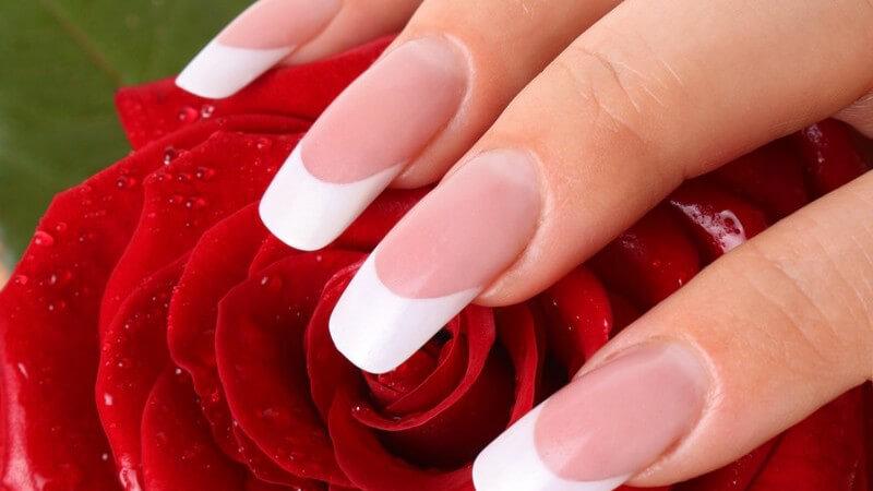 Gepflegte Hand mit langen Fingernägeln hält eine Rose