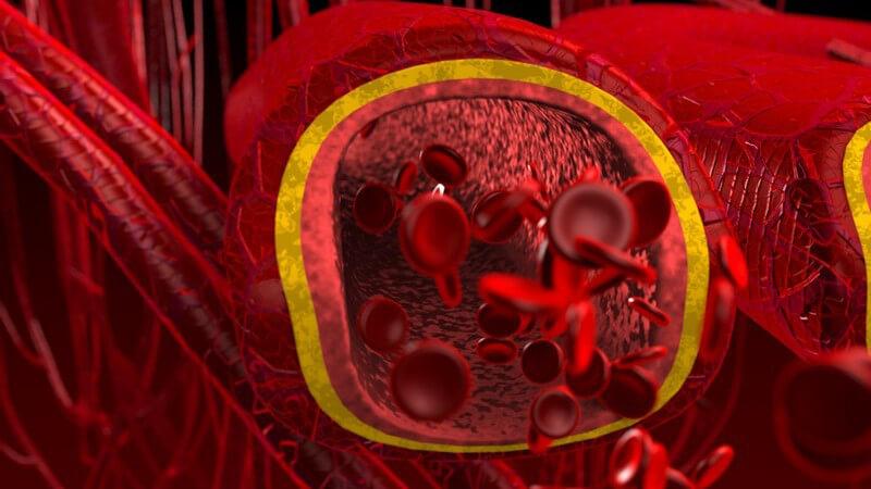 Grafik Querschnitt Blut Arterien und Venen