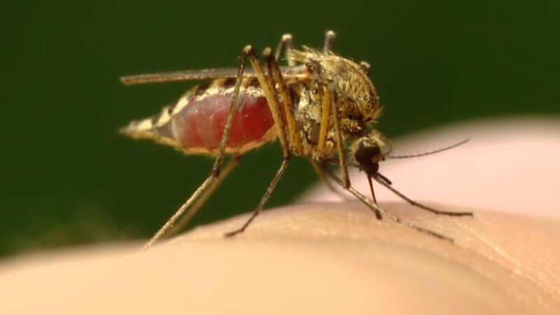 Nahaufnahme Mücke sticht in menschlichen Finger