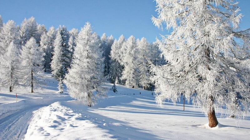 Weißer Wald, blauer Himmel und schneebedeckter Wanderweg