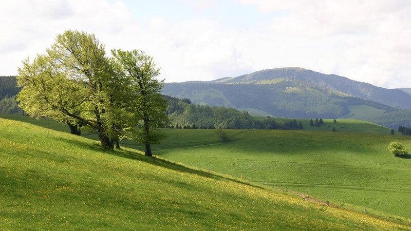 Grüne Wiese mit Blick ins Tal, 3 Bäume neigen sich im Wind nach links