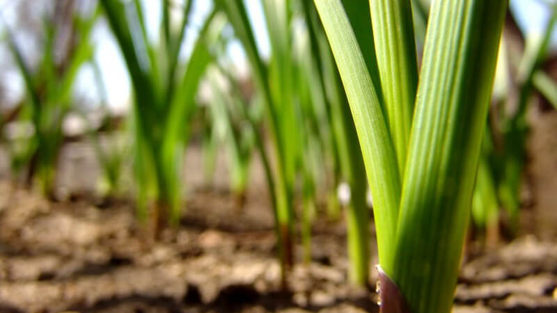 Nahaufnahme grüne Pflanze in Erde