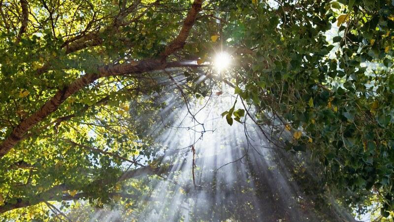 Zweige im Wald durch die Lichtsstrahlen scheinen