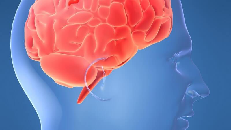 3D Grafik männlicher Schädel mit rotem Gehirn