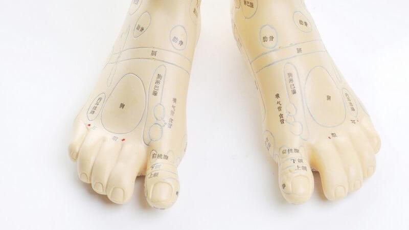 Modell von einem menschlichen Fuß mit farblich markierten Akupunkturpunkten