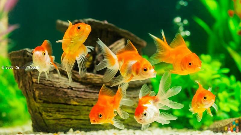 Aquarium Sauber Halten