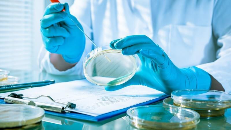 Laborant mit blauen Handschuhen hält eine lange Pipette in eine Petrischale, auf dem Tisch liegt ein Klemmbrett