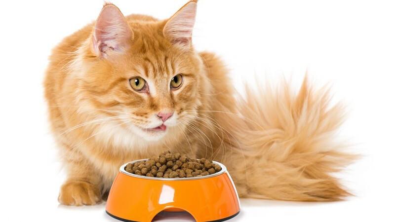 Goldbraune Katze frisst aus einem orangefarbenen Futternapf ihr Trockenfutter
